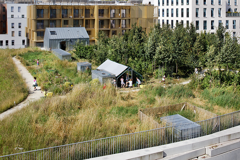 Groupe scolaire de la biodiversité et gymnase à Boulogne Billancourt (92) ©Takuji Shimmura