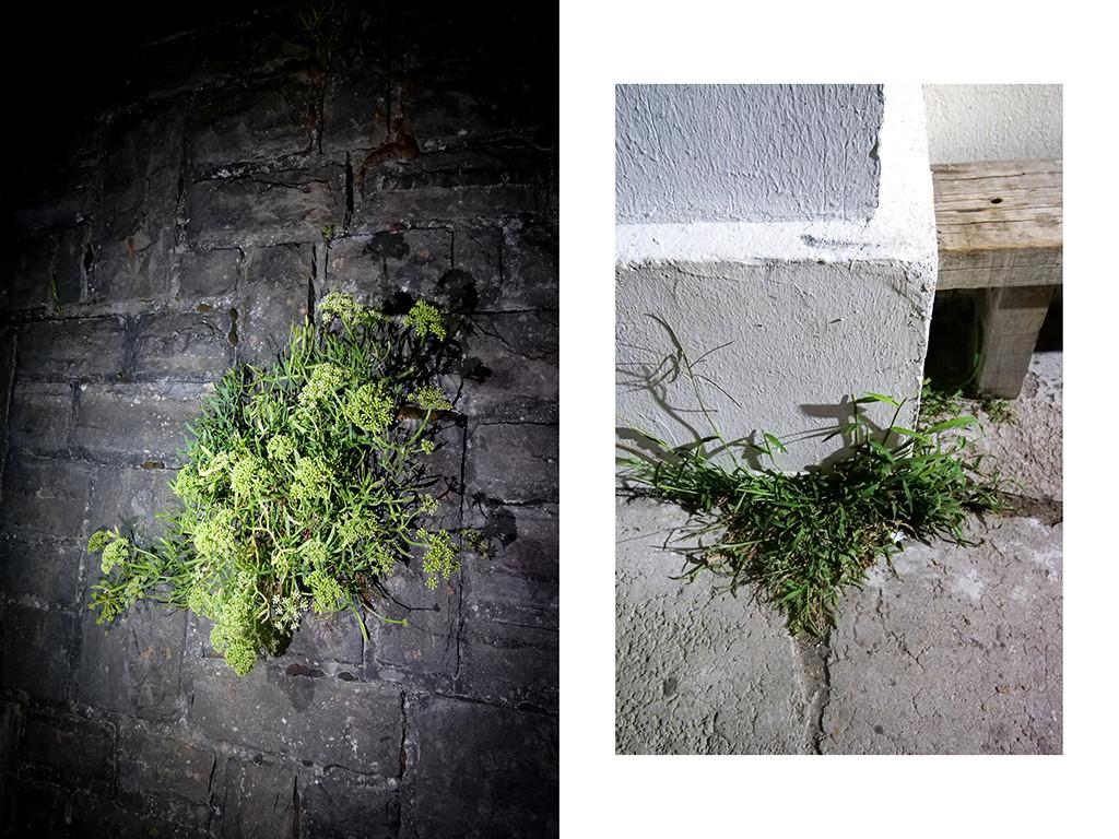 Plantes, port de Guéthary © Vanessa Bosio