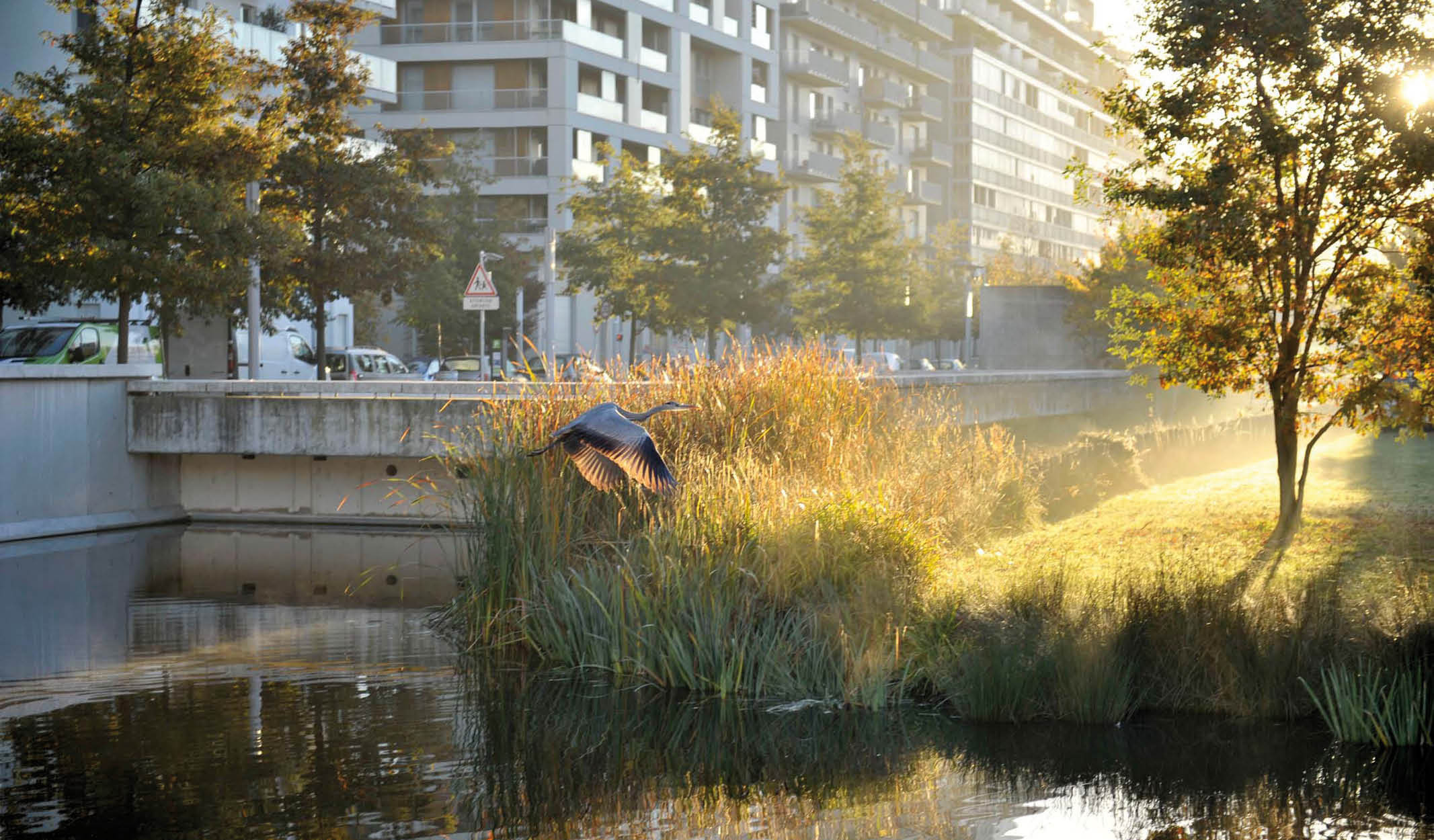 Parc de Billancourt, Boulogne Billancourt, 2011 © D-Raux
